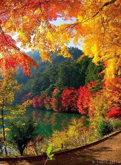 Paisajes Naturales Comunidad Google Autumn Scenes Fall Pictures Beautiful Landscapes