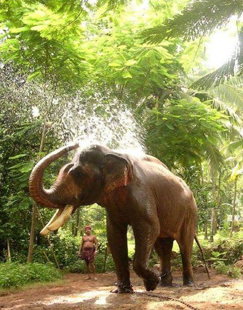 Kerala India With Images Kerala India Kerala Elephant