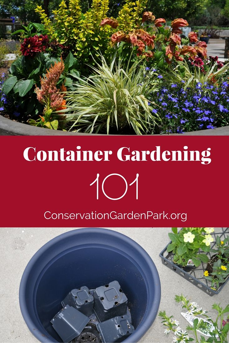 Great tips for gorgeous container gardens from the Conservation