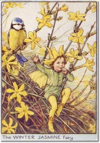 Cicely Mary Barker - Flower Fairies of the Winter - The Winter Jasmine Fairy