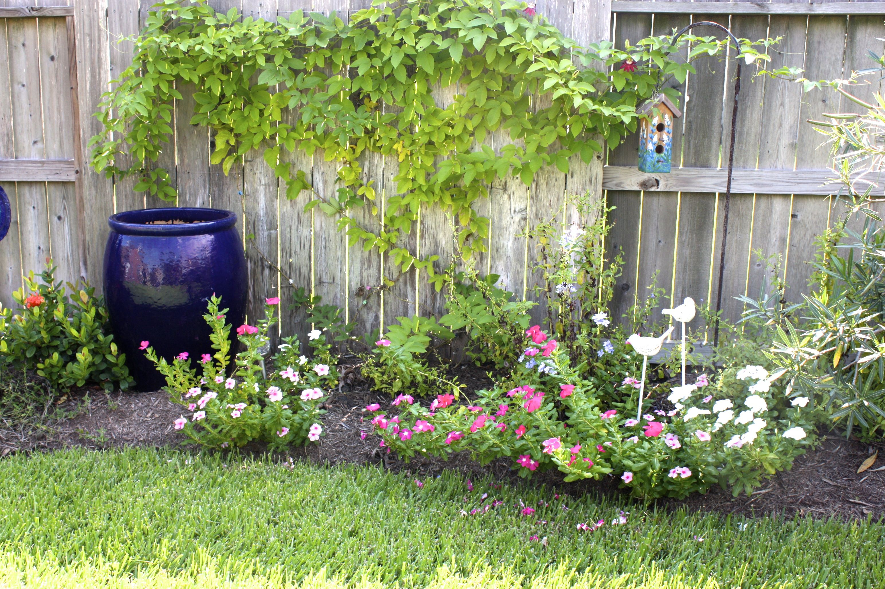 New landscaping along fence with blue jar from Wildseed ... on Backyard Landscaping Along Fence id=22726