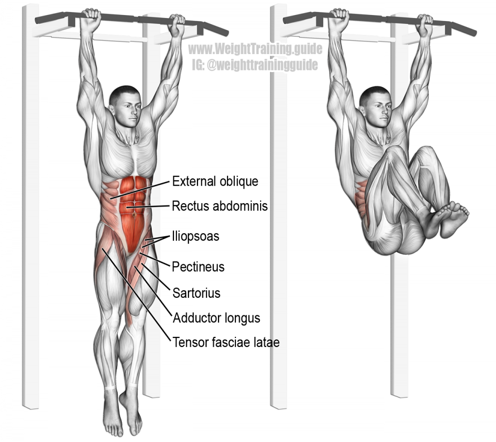Hanging leg and hip raise exercise guide w/ video