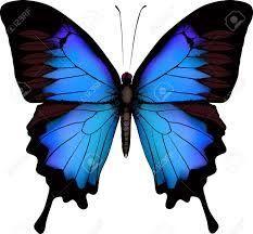 Resultado De Imagen Para Dibujos Mariposas Color Azul Mariposas