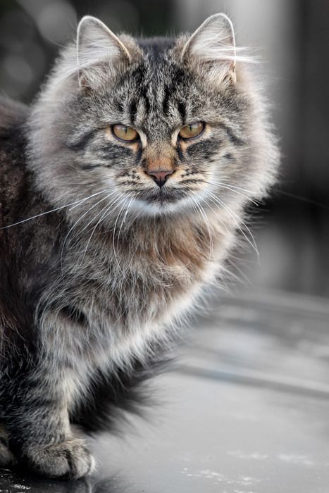 """Cats are a mysterious kind of folk. There is more passing in their minds than we are aware of."""" - Sir Walter Scott"""