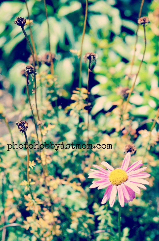 http://photohobbyistmom.com/