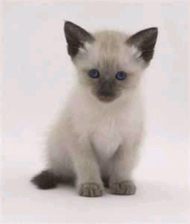 Pin Von Frances Katsoudas Auf Cute Animals Haustiere Hund Und Katze Tiere