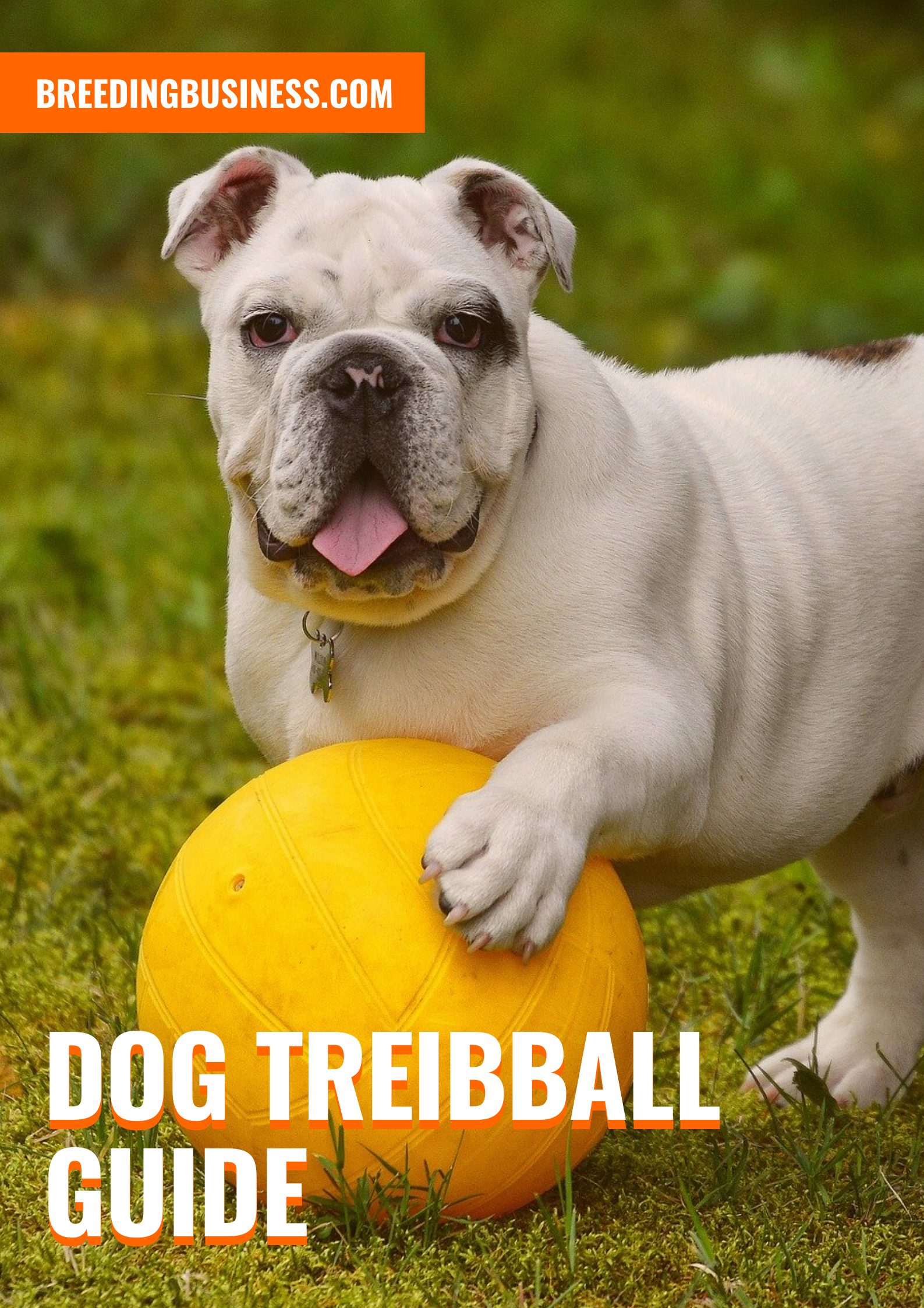 Dog Treibball Guide Rules Training Equipment Resources In 2020 Dogs Pets Dog Supplies