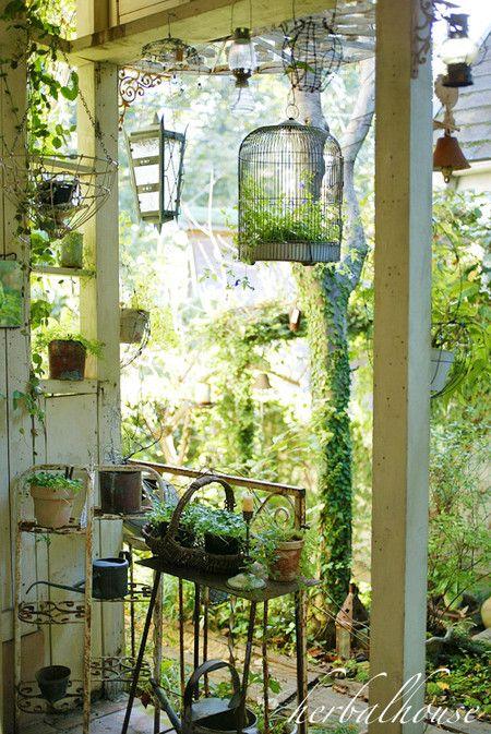 Photo of La jaula con plantas