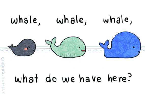 ha whale pun    brillant | Laughable Things | Puns jokes