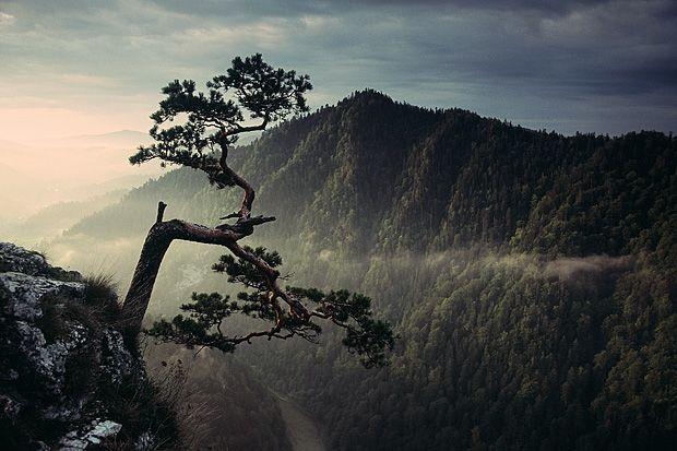 Pieniny  zdjęcia przyrody-Poland-