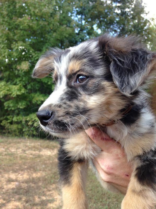 Adopt Scruffy Pending On Petfinder Labrador Retriever Mix Dogs Retriever Mix