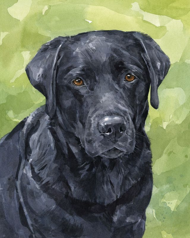 Black Lab watercolor - david scheirer | Watercolors ...