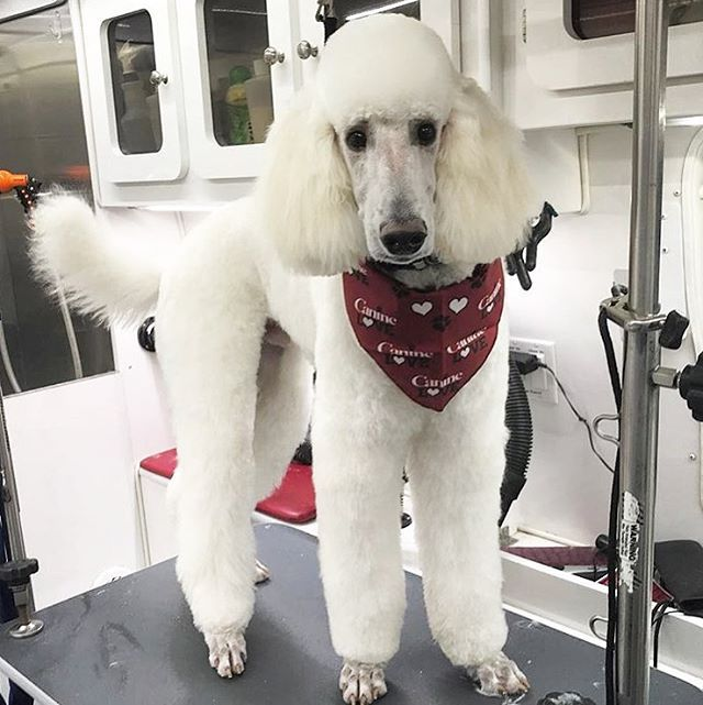 Quinn Is Such A Handsome Boy After His Groom With Alyssa