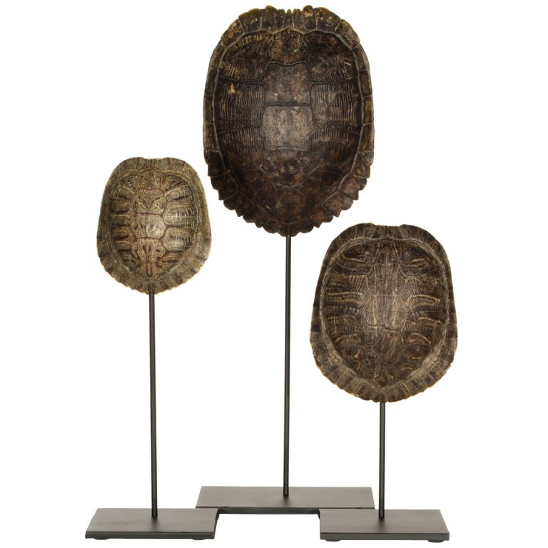 Collection Of Authentic Turtle Shells On Steel Display Stands