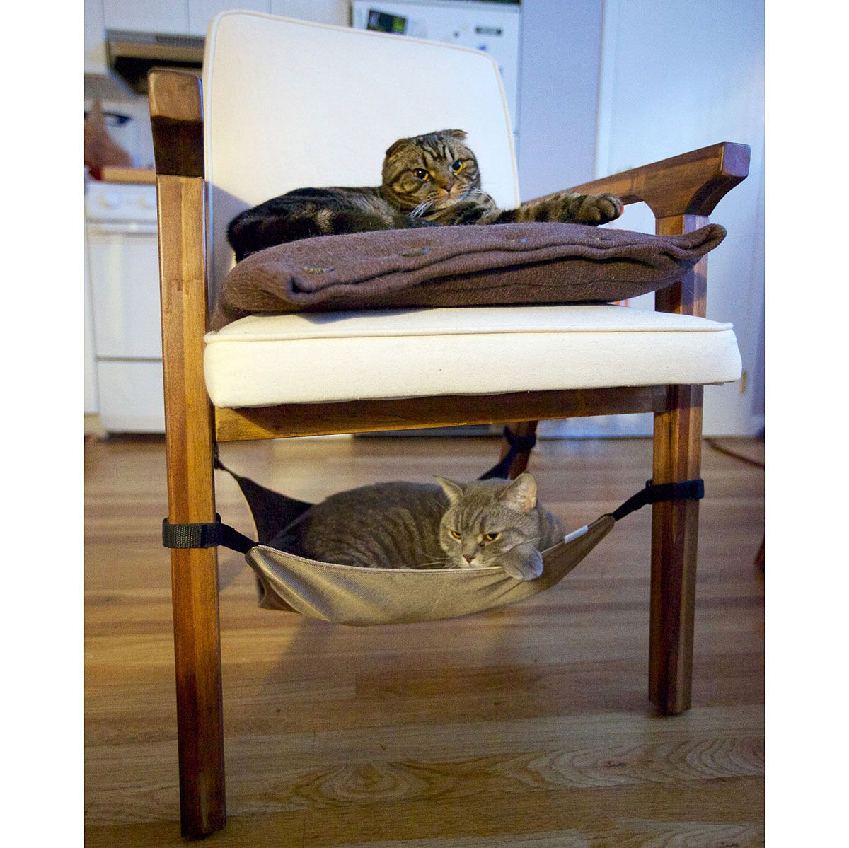 cat crib in this case it s more like kitty bunk beds pretty