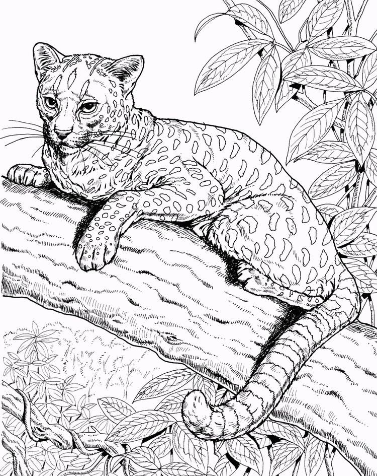 Free Jaguar Coloring Page Jaguar Animal Rainforest Animals Animal Coloring Pages