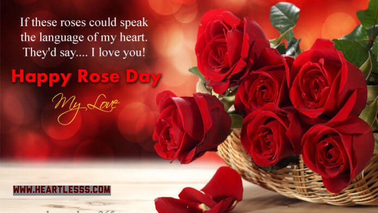 Happy Rose Day Happy Rose Day Wallpaper Rose Day Wallpaper Rose
