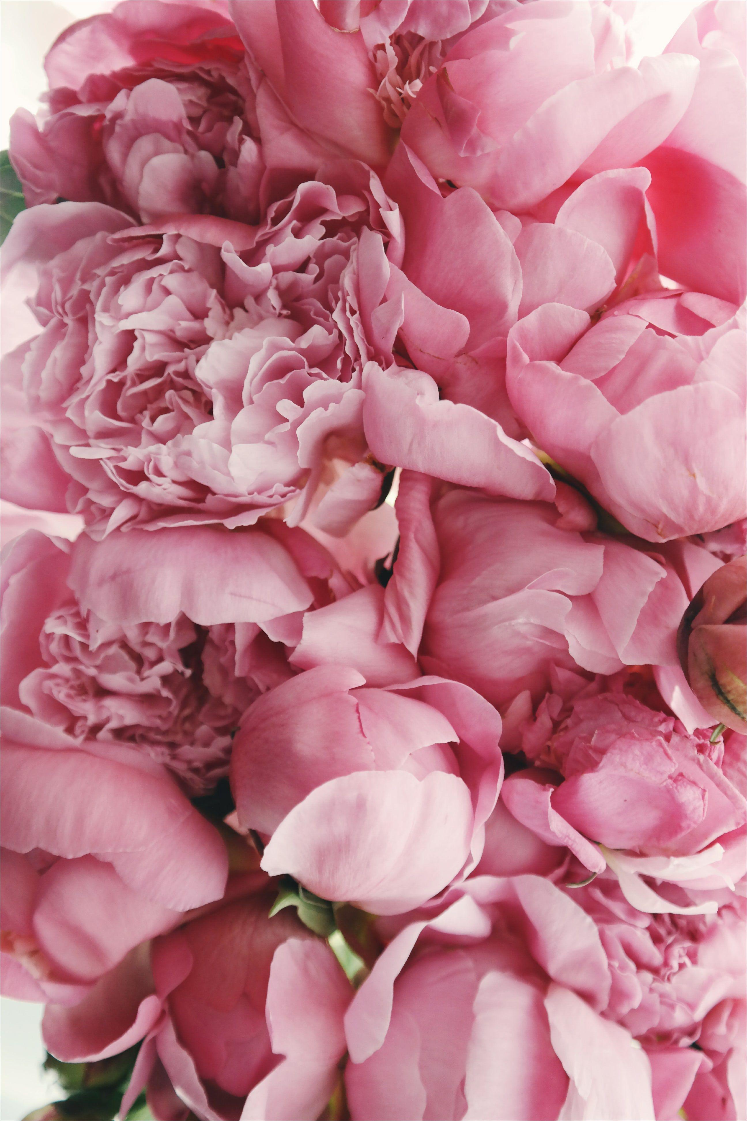 Pink Peonies Peonies Pinterest Flowers Peonies And Beautiful