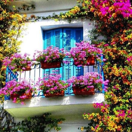 The blossoming European streets-When you open the door and window as you get up in the morning, it can surely brings you good mood.