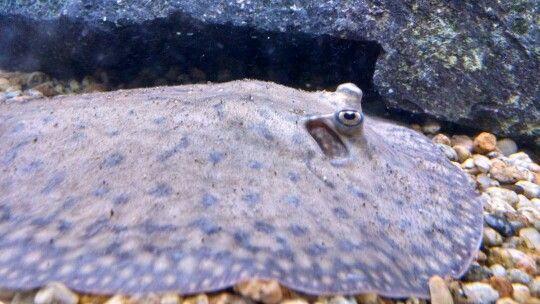 En mi acuario
