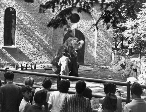 Lo zoo di Milano ai Giardini Pubblici l'elefantessa