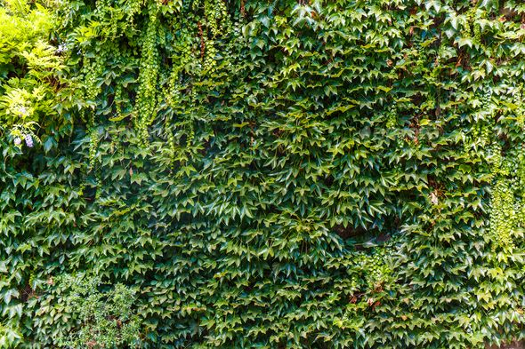 Green Wall Background Stock Photo Images Green Wall Wall Background Background