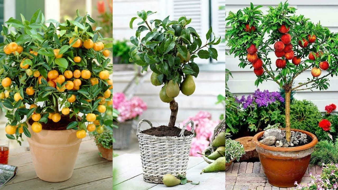 Pin By Marge Morrison On Flowers Fruit Trees Edible Plants Container Gardening Vegetables