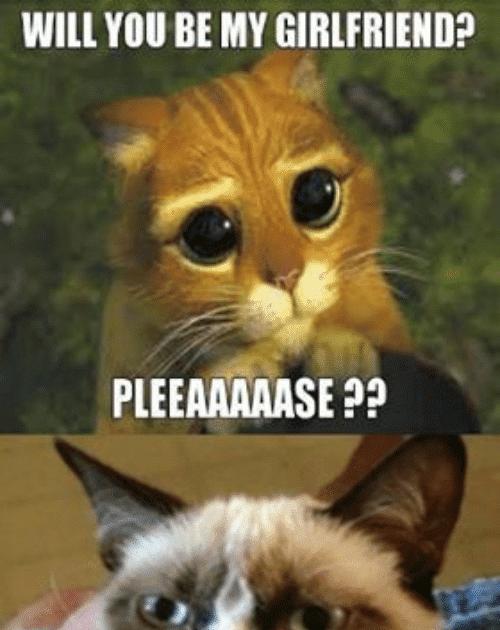 27 Hilarious Cat Memes Clean Di 2020