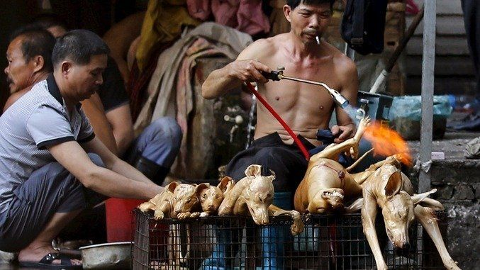 Sponsor President of Vietnam, Trương Tấn Sang and Vice President Nguyễn Thị Doan. Stop Catholics in Vietnam of KILLINGS and TORTURING dogs for Christmas NOW (2015)! The World is watching You!!!