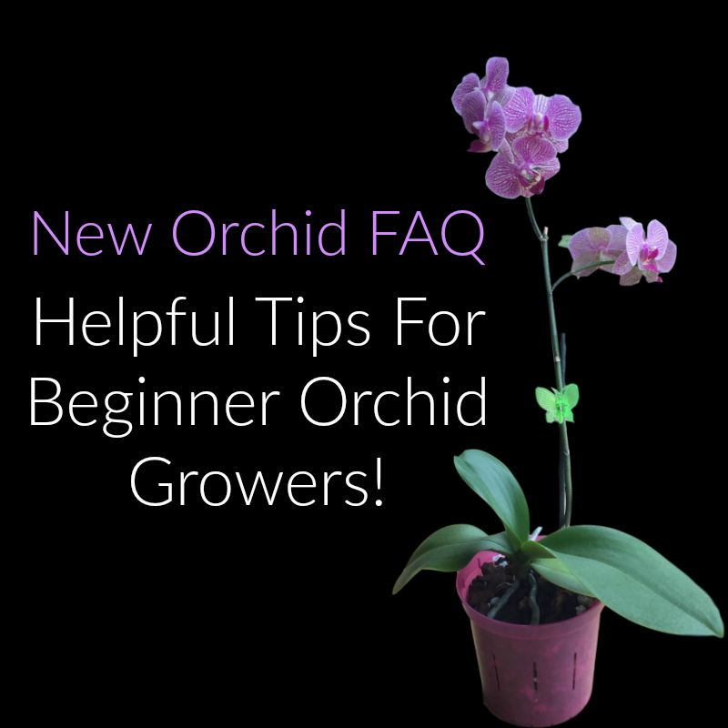New Orchid Helpful Tips For Beginners Orchid Growers #growingorchids