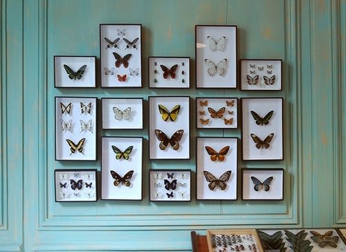 Butterfly Collection In A Wall Panel