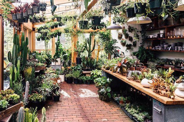 Pistils Nursery Portland Or Garden Plant Tropical Plants