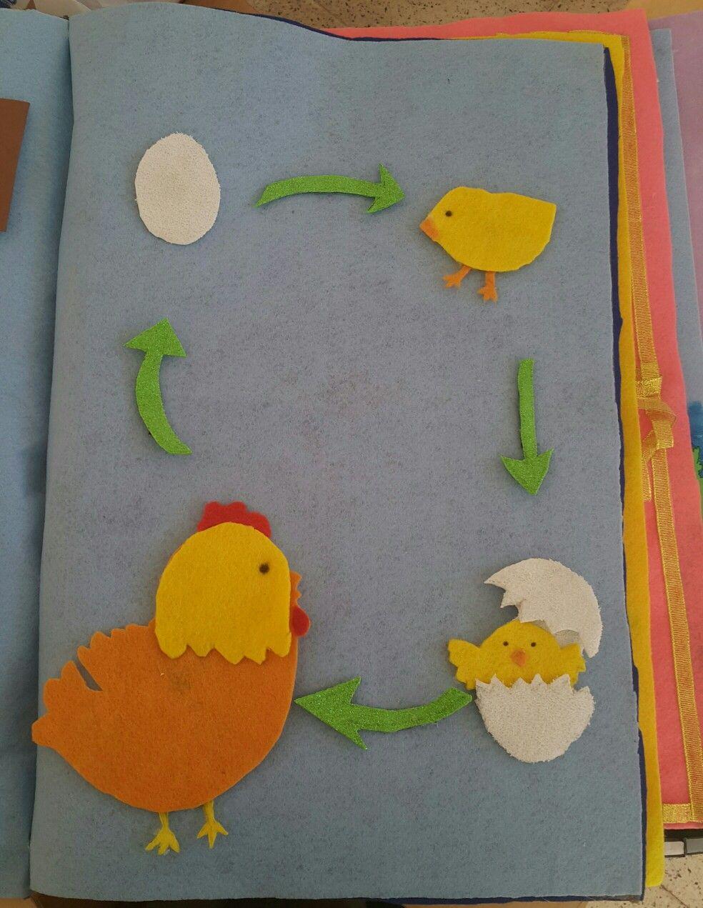 دورة حياة الدجاج Kids Rugs Kids Rugs