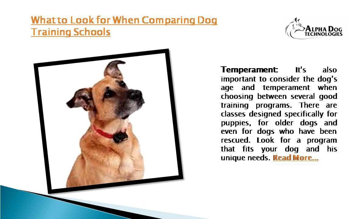 What To Look For When Comparing Dog Training Schools Temperament
