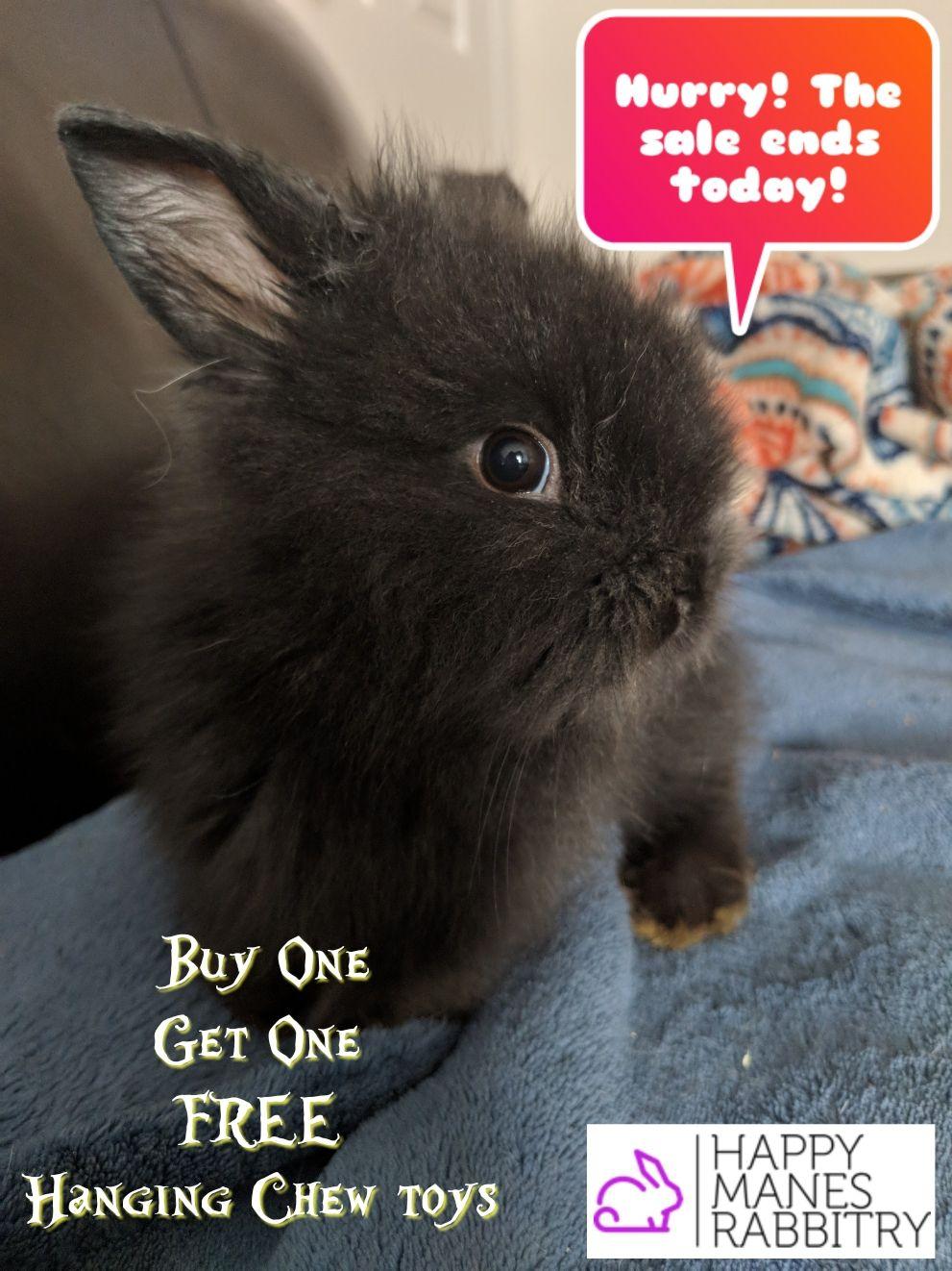 Use Code Bogo29 At Checkout Bunnies Rabbits Pets Sale Shop Petshop Pet Shop Pets Bunny
