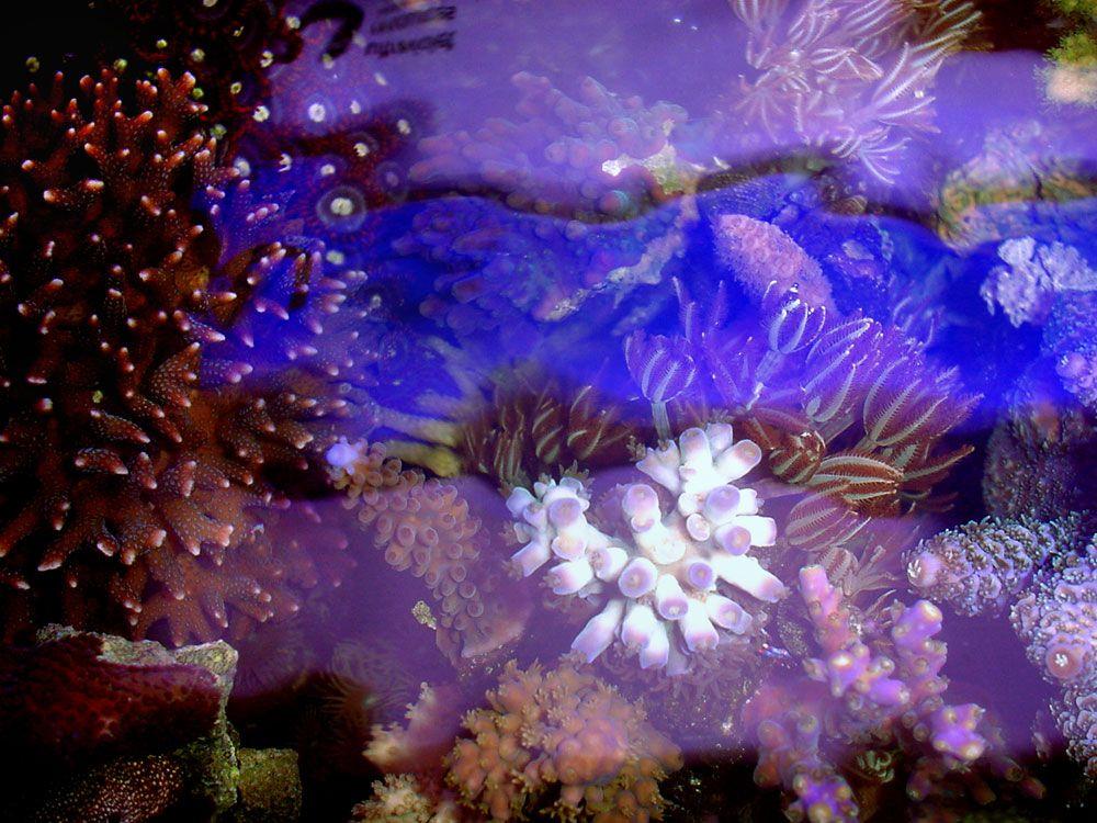 Sally Jo S Reef Aquarium Pics Top View 8 25 00 Reef Tank Reef Aquarium Reef