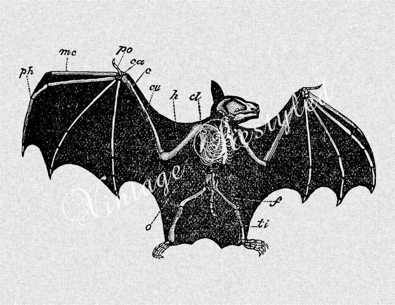 anatomical bat skeleton tattoos