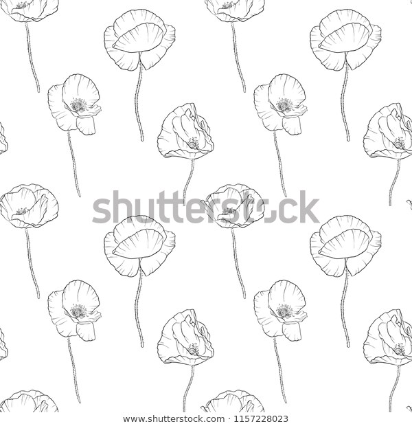 Vector Seamless Pattern Drawing Poppy Flowers Stock Vector
