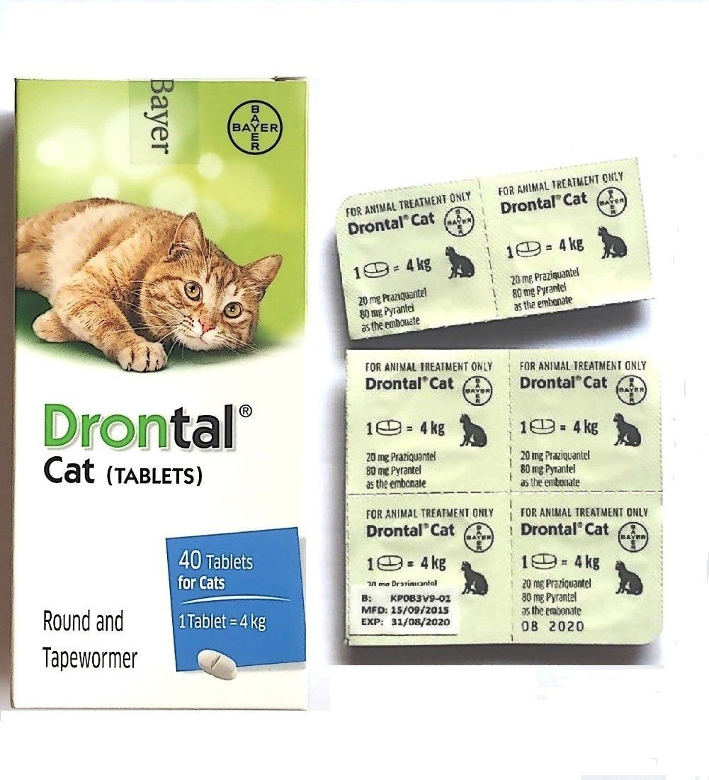 Best Shop Product Offering Bayer Drontal Cat Allworms Round And Tap Worm 6 Tablets Cat Supplies Cat Supplies Animal Treatment Cats