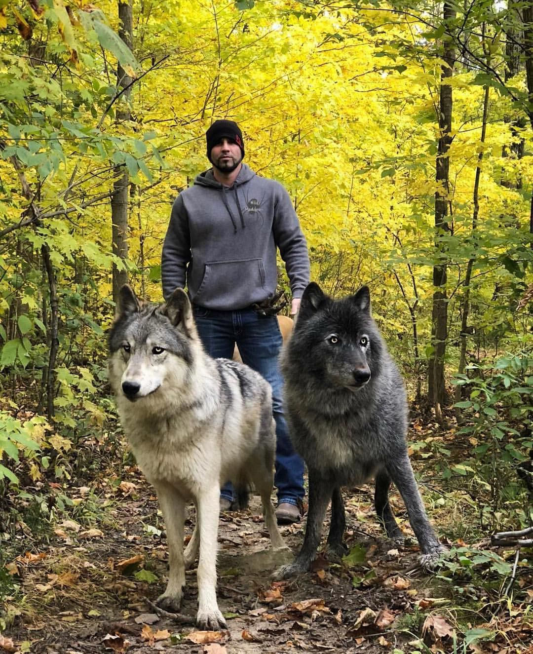 Pin by RjoUba on Wolves Wolf hybrid dogs, Animals