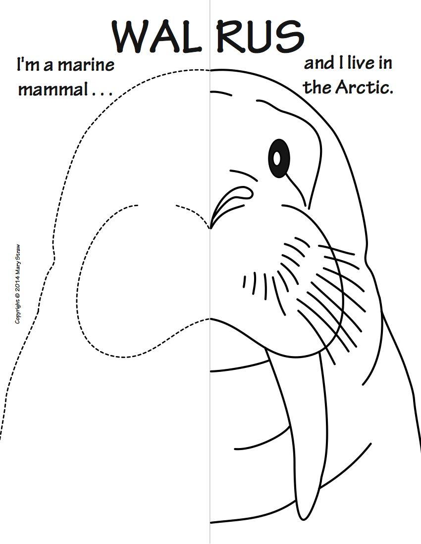 Sea creatures symmetry activity coloring pages kindergarten