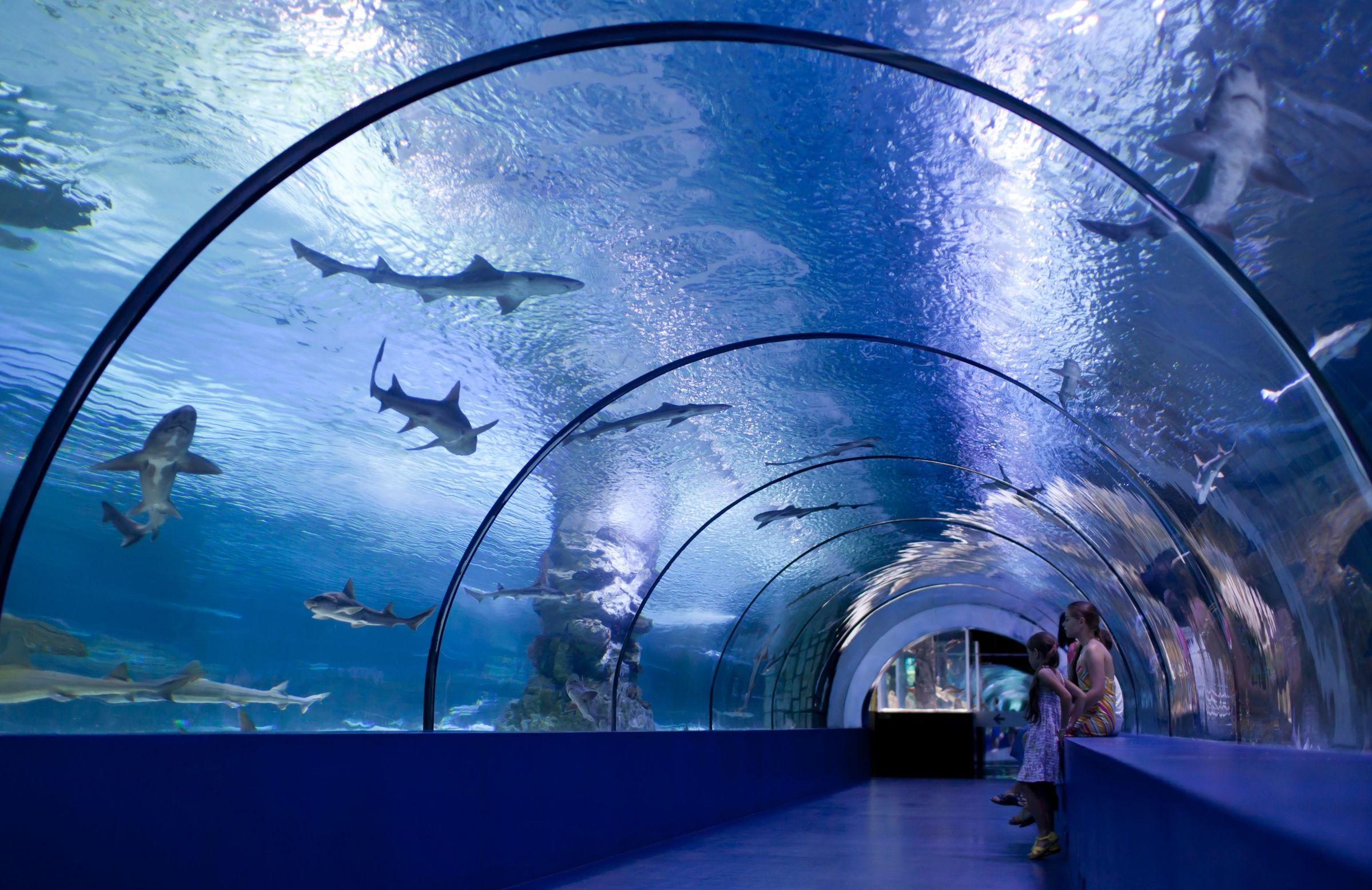 The Osaka Aquarium Kaiyukan is an aquarium located in the ...