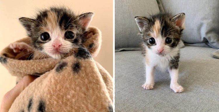 Homeowner Discovers Orphaned Kitten Under Their House After Seeing Stray Cats In Neighborhood Love Meow Helping Animal Shelter Pets Kittens Cats Little Kittens