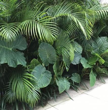 52 Ideen für die Landschaftsgestaltung des Vorgartens mit tropischen Elefantenohren #tropischelandschaftsgestaltung