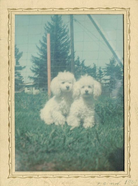 Chuckie & Debbie (The Townsend Kids) 1967 | Flickr - Photo Sharing!