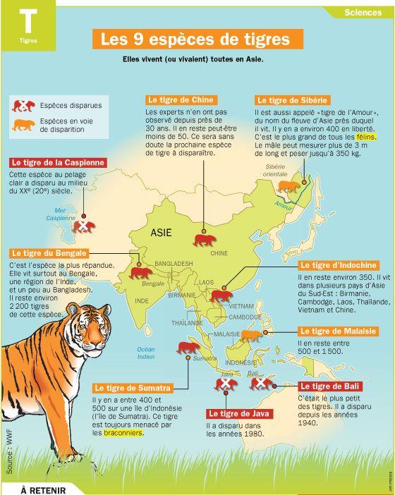 Les 9 esp ces de tigres fiches animal et mon quotidien - Differentes especes de pins ...