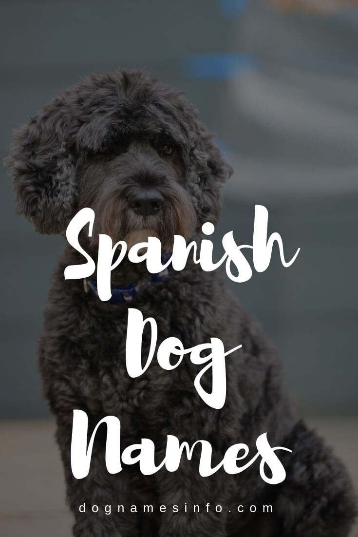 Spanish Dog Names 550 Unique Names For Male And Female Pitbulls In 2020 Dog Names Dog Names Unique Dog Names Male