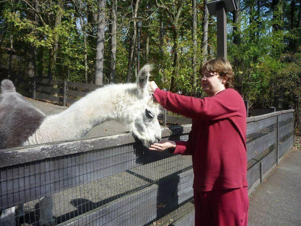 Llama at Oglebay Good Zoo in Wheeling West Virginia Best of