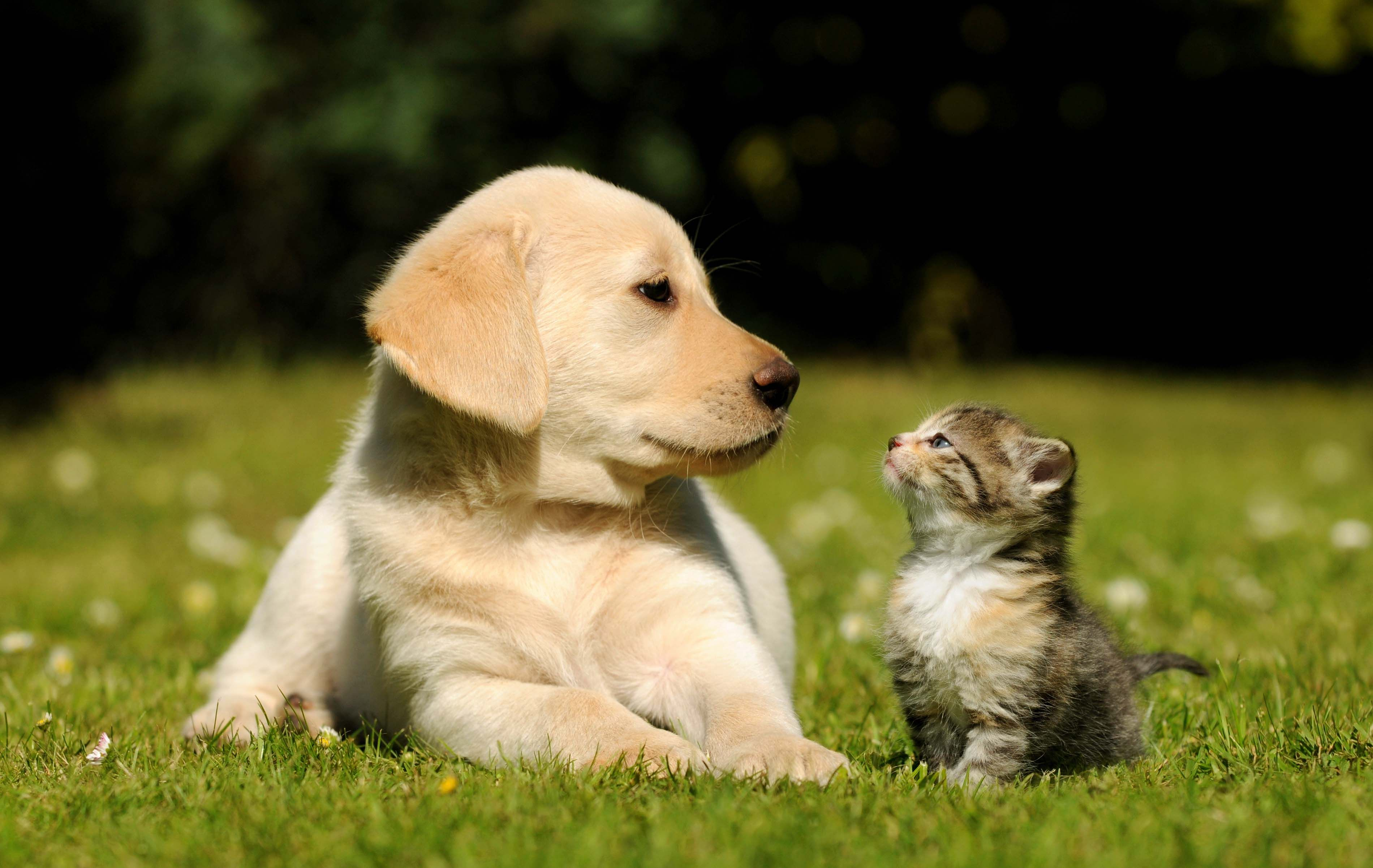 cat and dog wallpaper free download | hd wallpapers | pinterest