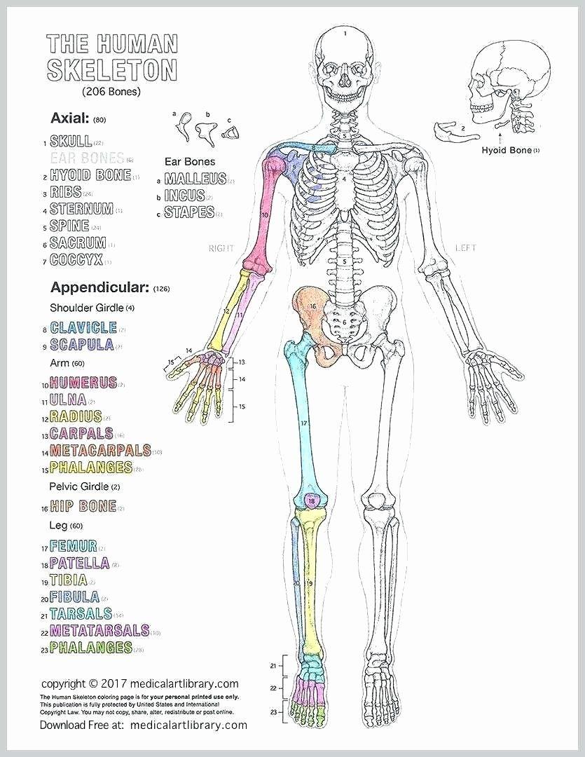 Human Anatomy Drawing Book Pdf Free Download in 2020 ...